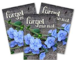 forget me not seed packets funeral seed packets etsy