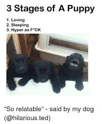 Hyper Dog Meme - 3 stages of a puppy 1 loving 2 sleeping 3 hyper as f ck so relatable