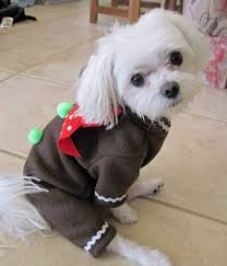 gingerbread man halloween costumes for dogs
