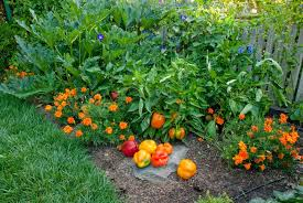 drought strategies for vegetable gardening seed savers exchange