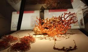 les cuisines fran軋ises coral museum sardegnaturismo sito ufficiale turismo della