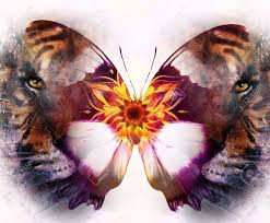 portrait tiger and butterfly computer collage color abstract