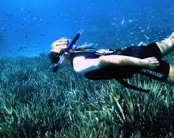 Washington snorkeling images Top 10 dive snorkel spots tourism western australia jpg