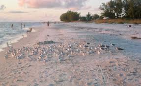 island real estate anna maria island living