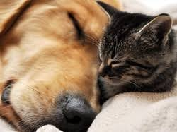 Creature Comforts Pet Sitting All Creature Comforts Llc All Creature Comforts Pet Sitting