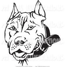 drawn face pitbull pencil and in color drawn face pitbull