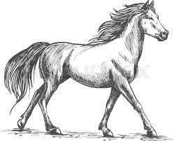 proud white horse walks gracefully with its front hoof forward