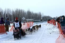 Sled dog team at Iditarod Focus Alaska Pinterest