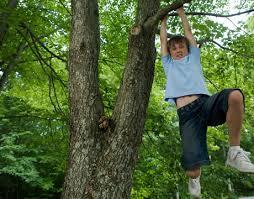 go climb a tree functional fitness va