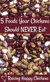 164 best chickens images on pinterest backyard chickens raising