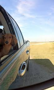 804 best dachsunds and friends images on pinterest animals