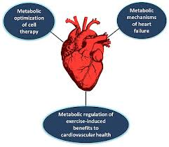 Anatomy Of The Heart Lab Bradford Hill Lab Laboratory Of Cardiac Metabolism And Repair