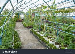 rooftop garden rooftop vegetable garden growing stock photo