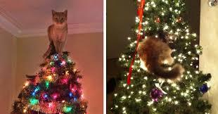 cat christmas 15 cats helping decorate christmas trees bored panda