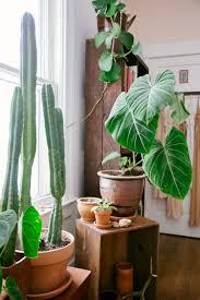 earthy boho garden pots cacti and indoor