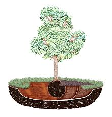 For A Tree How To Plant A Tree Best Time To Plant Trees