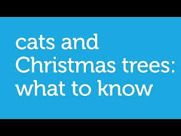how to keep cat out of christmas tree with pictures videos