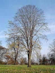 is my tree dead