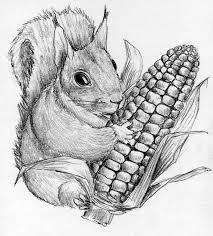 squirrel with corncob stock illustration image of mammal 22477363