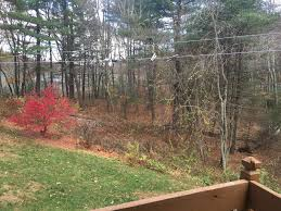 solutions for steep yard landscape trees backyard input