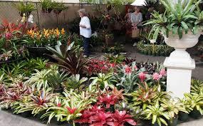 tropical garden design ideas brisbane tropical garden design ideas