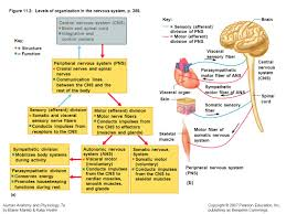 Human Anatomy And Physiology Marieb Hoehn Overview Topic Communications Systems Nervous System And
