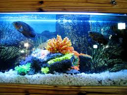 start an indoor fish farming business from home worldwide
