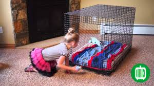crate training kong solutions crate training youtube
