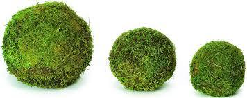 decorative moss balls moss balls for sale