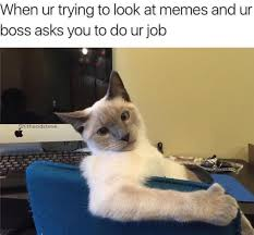 Cats Memes - 15 cat memes that are super relatable