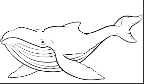 coloring page killer whale jonah and the whale coloring page whale coloring pages classy killer