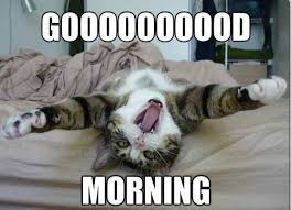 Good Morning Meme - best 25 good morning meme ideas on pinterest good morning cards