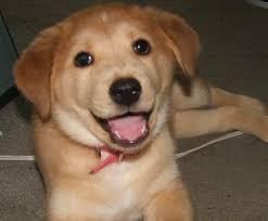 Advice Dog Meme Generator - memes eng 2720 writing with new media