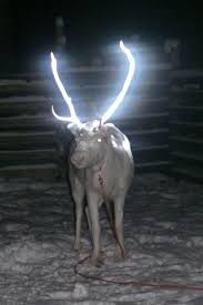 glow in the dark reindeer may take over finland care2 healthy living