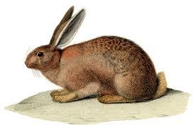 vintage rabbit vintage stock image amazing brown rabbit the graphics fairy