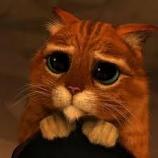 I Can Haz Meme Generator - shrek cat v1 caption character meme generator favorites