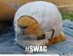 Shaved Guinea Pig Meme - funny guinea pigs memes images