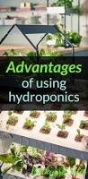 best 25 homemade hydroponic system ideas on pinterest