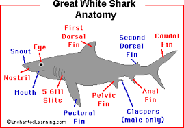 shark classification enchanted learning software