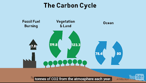 where does co2 come from updated quora