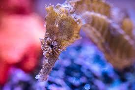 Floating Aquascape Reef2reef Saltwater And Reef Aquarium Forum - keeping seahorses in aquaria 5 feeding your ponies reef2reef