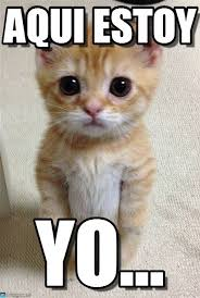 Gato Meme - gato em p礬 aqui estoy yo by anonymous spn1 pinterest