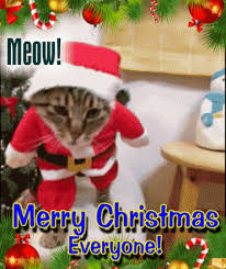 cat free ecards greeting cards 123