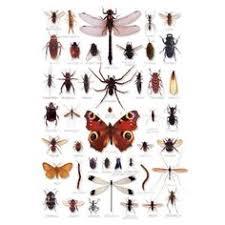 insecte de cuisine insectes de cuisine sayaka yamamoto insectes yamamoto