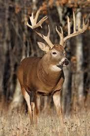 download wallpaper x deer smoke run horns full hd p hd