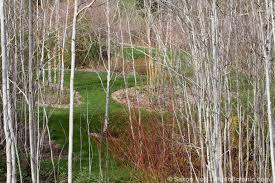 winter trees photobotanic