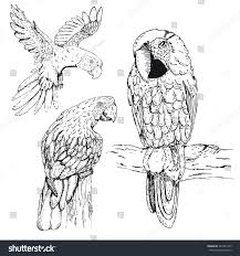 hand drawn sketch parrots isolated on stock vector 367931465