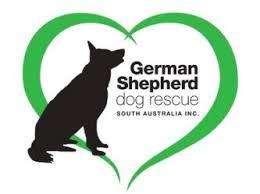 south australian german shepherd breeders german shepherd dog rescue south australia inc petrescue