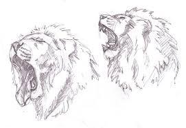 lion sketches by tekuatl on deviantart
