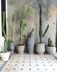 accessories indoor cactus garden ideas 20 beautiful indoor